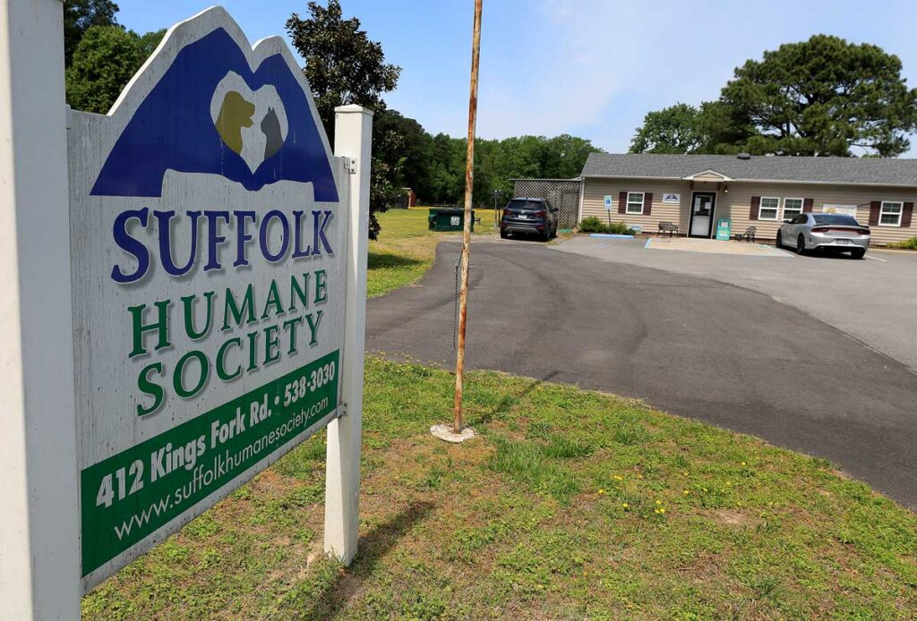 Adult cats up for adoption at the Suffolk Humane Society Wednesday April 28, 2021.
